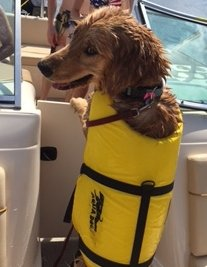 Harley 1st Boat Ride
